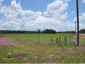57.18 acres in Williston, Florida