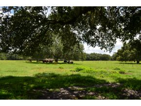 40 acres in Morriston, Florida