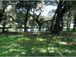 146.7 acres in Williston, Florida