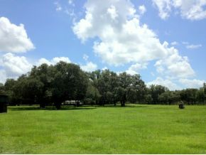 35 acres in Williston, Florida