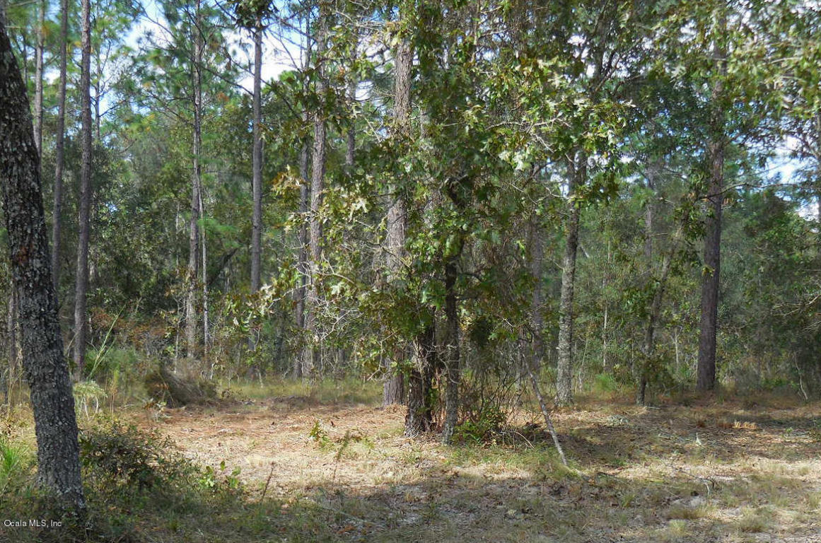 Real Estate for Sale, ListingId: 31003554, Morriston, FL  32668
