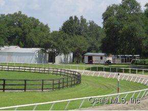 110.5 acres Morriston, FL