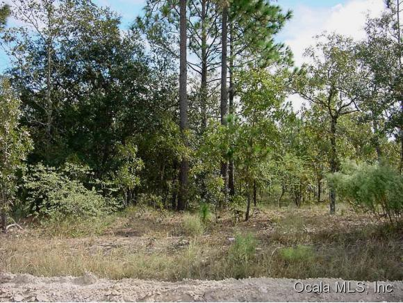 primary photo for tbd NE 96th Avenue, Bronson, FL 32621, US