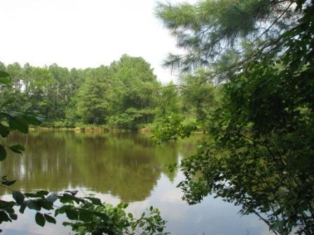 Image of Acreage for Sale near Richburg, South Carolina, in Chester County: 54 acres