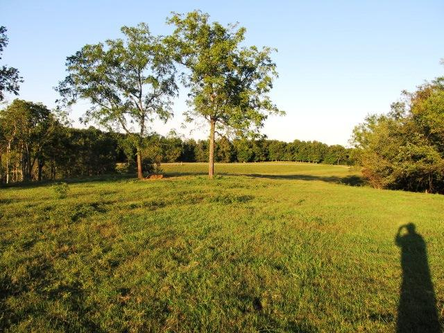 Image of Acreage for Sale near Lewisburg, Tennessee, in Marshall county: 90.00 acres