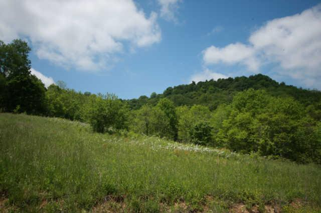 Image of Acreage for Sale near Woodbury, Tennessee, in Cannon county: 43.03 acres