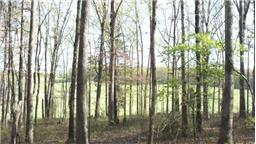 54.9 acres by Lyles, Tennessee for sale