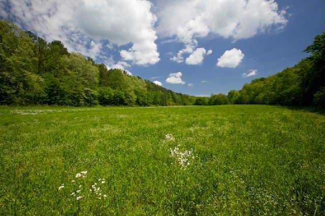950 acres Pegram, TN