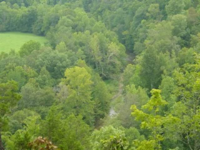 Image of Acreage for Sale near Pall Mall, Tennessee, in Pickett County: 14.15 acres