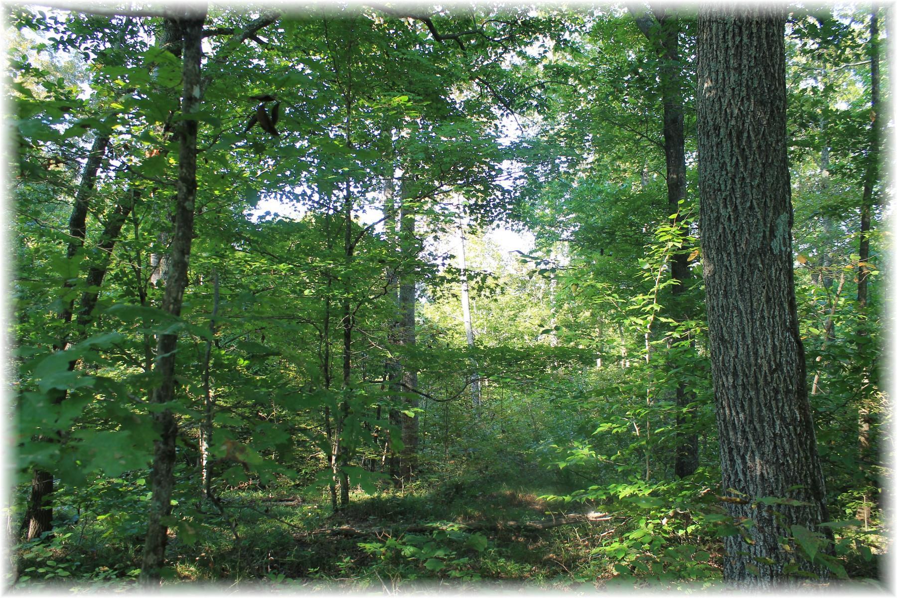 0 Sams Creek Pegram, TN 37143