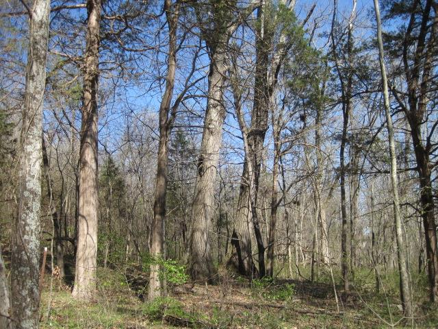 Image of  for Sale near Lebanon, Tennessee, in Wilson County: 21.43 acres
