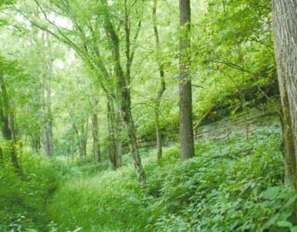 0 Brimstone Creek Road Moss, TN 38575
