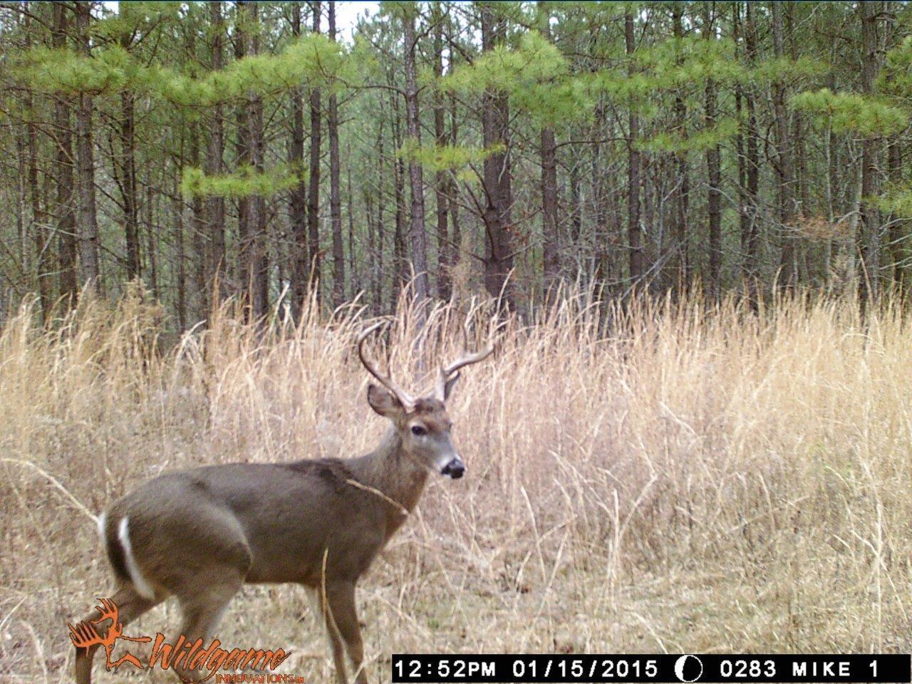 0 Hickory Trace Lyles, TN 37098