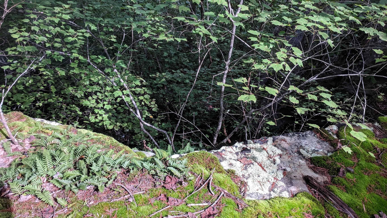 0 Grassy Ridge Rd 5.73 acres - photo 13