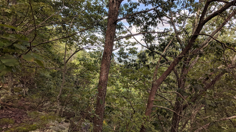 0 Grassy Ridge Rd 5.73 acres - photo 7