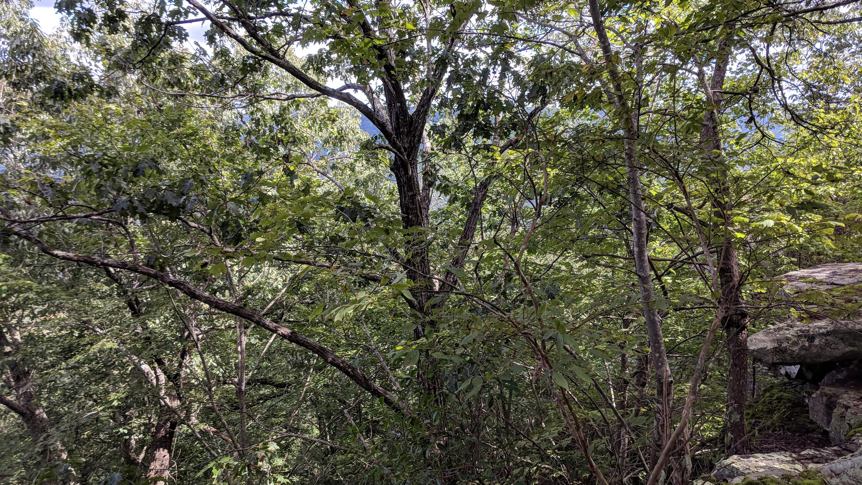 0 Grassy Ridge Rd 2.15 acres - photo 11