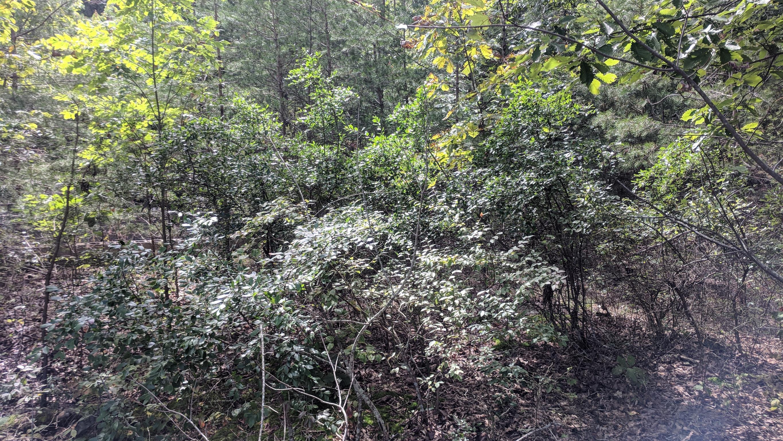 0 Grassy Ridge Rd 2.15 acres - photo 1