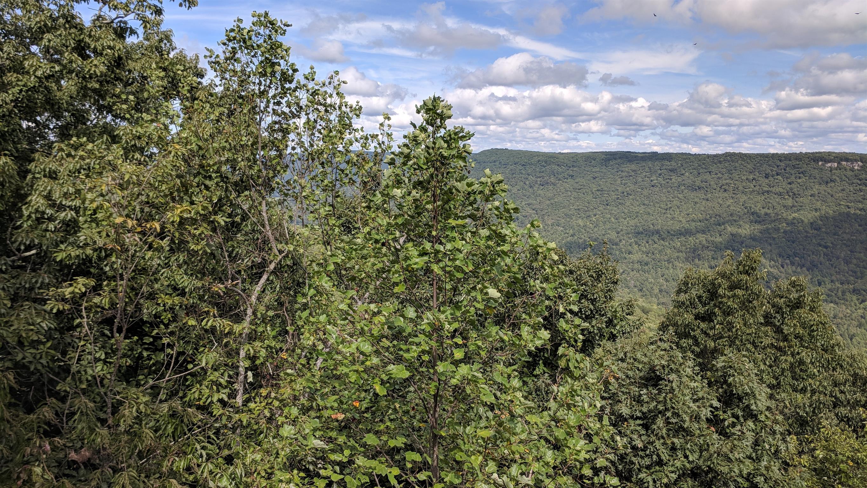 0 Grassy Ridge Rd 2.15 acres - photo 4
