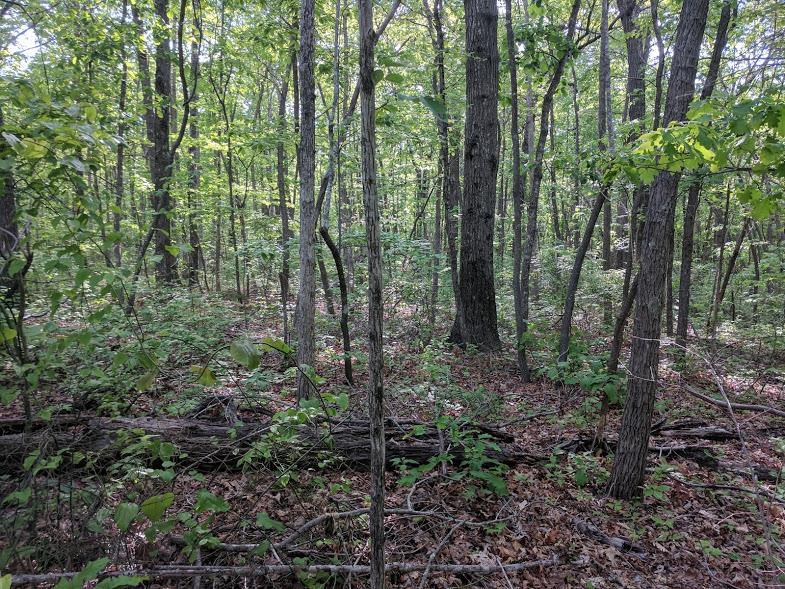0 Deer Run Rd Lot 242 - photo 9