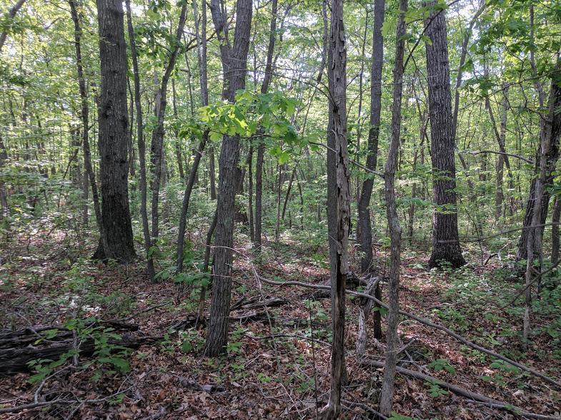 0 Deer Run Rd Lot 242 - photo 10