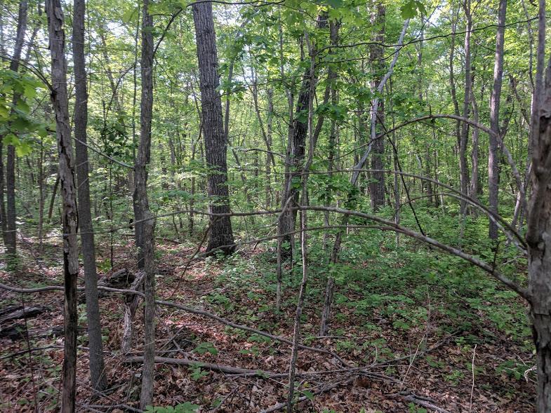 0 Deer Run Rd Lot 242 - photo 11