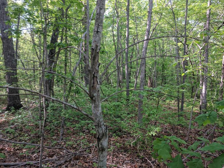 0 Deer Run Rd Lot 242 - photo 12
