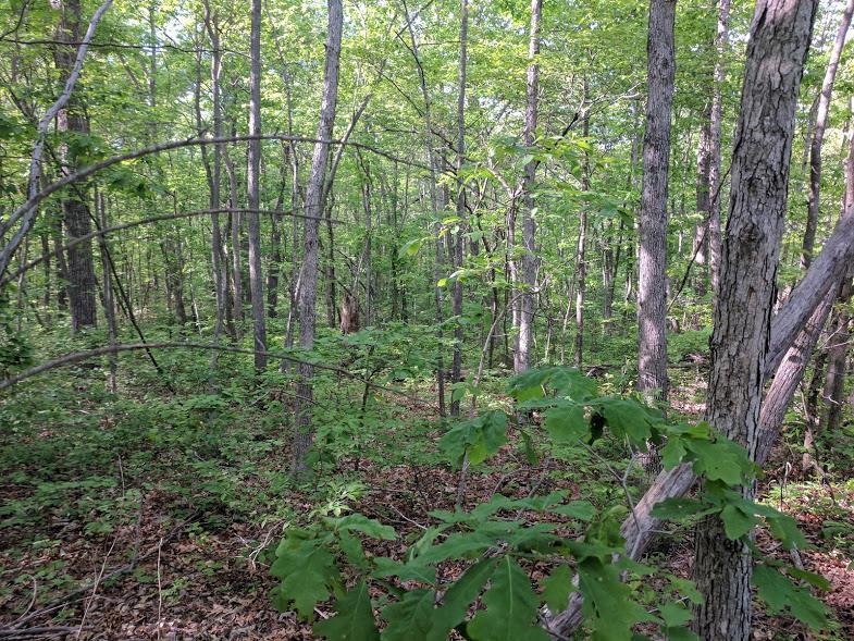 0 Deer Run Rd Lot 242 - photo 13