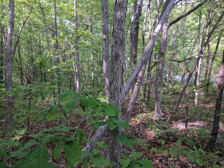 0 Deer Run Rd Lot 242 - photo 14