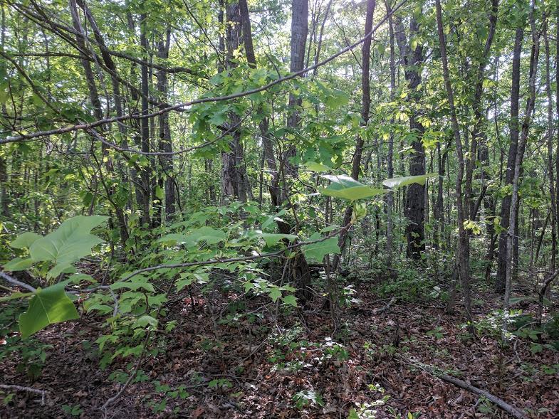 0 Deer Run Rd Lot 242 - photo 4