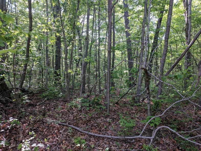 0 Deer Run Rd Lot 242 - photo 5
