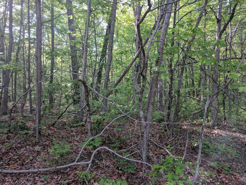 0 Deer Run Rd Lot 242 - photo 6