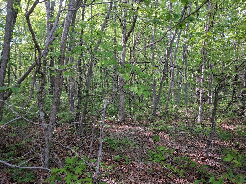 0 Deer Run Rd Lot 242 - photo 7