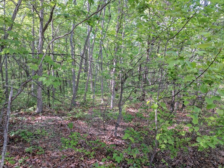 0 Deer Run Rd Lot 242 - photo 8