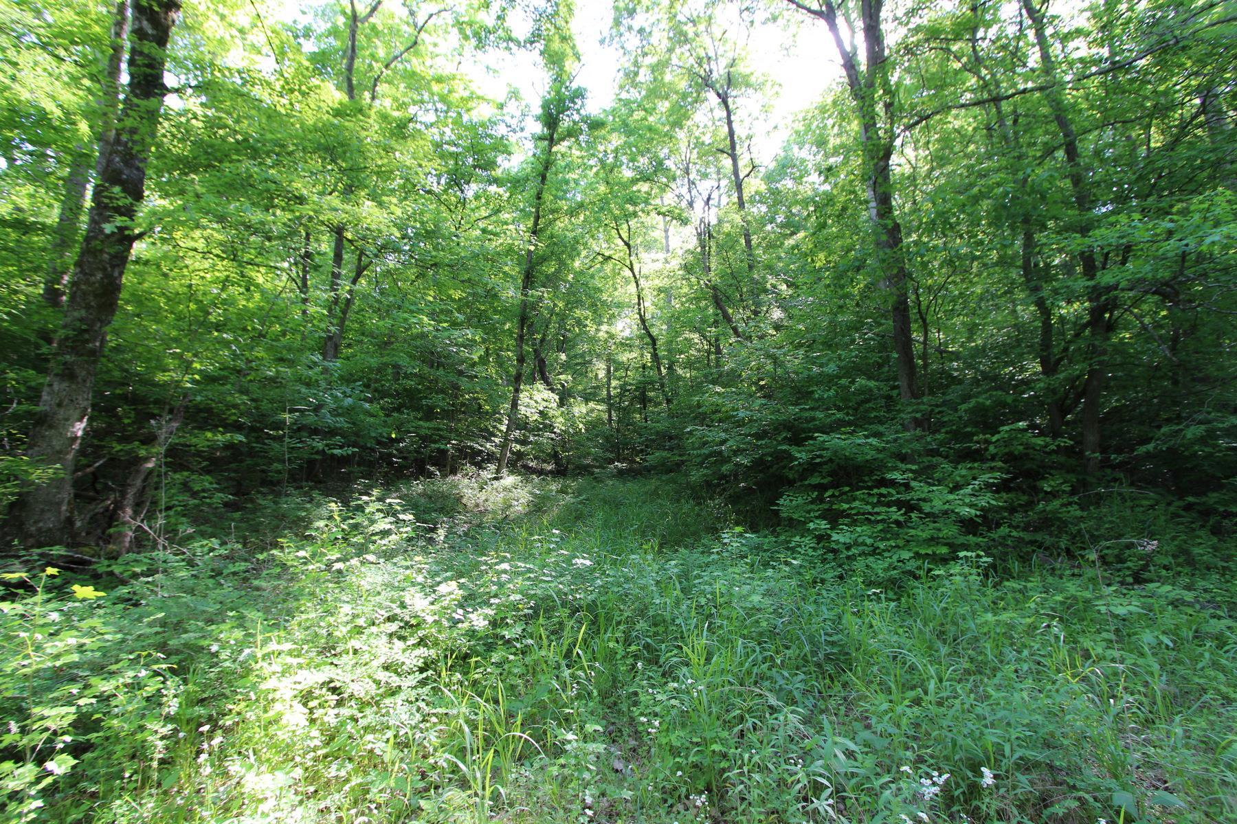 0 Swan Creek Rd - photo 4