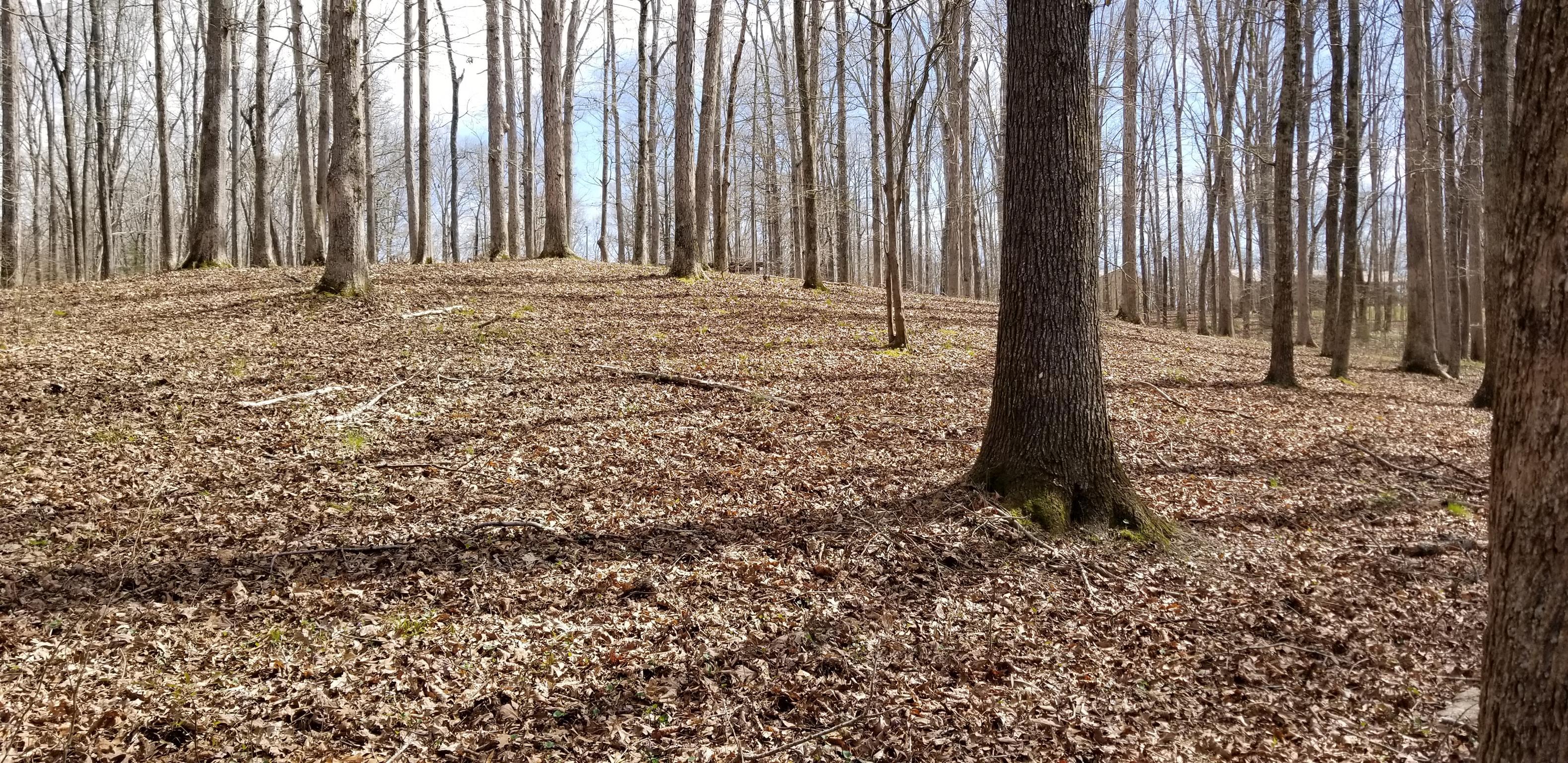 0 Driftwood Dr Lobelville, TN 37097