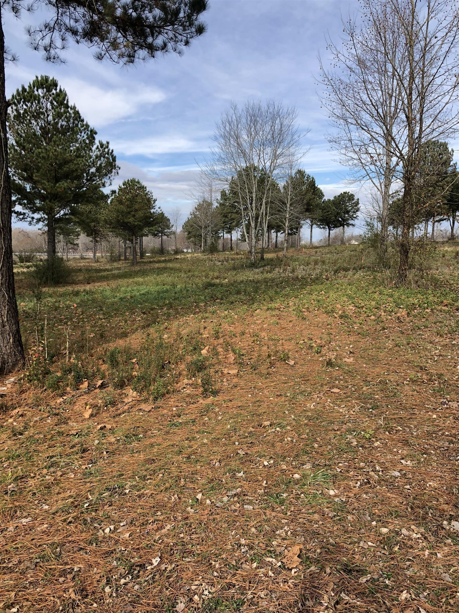 0 Brace Rd Lot #1 & #8 Summertown, TN 38483