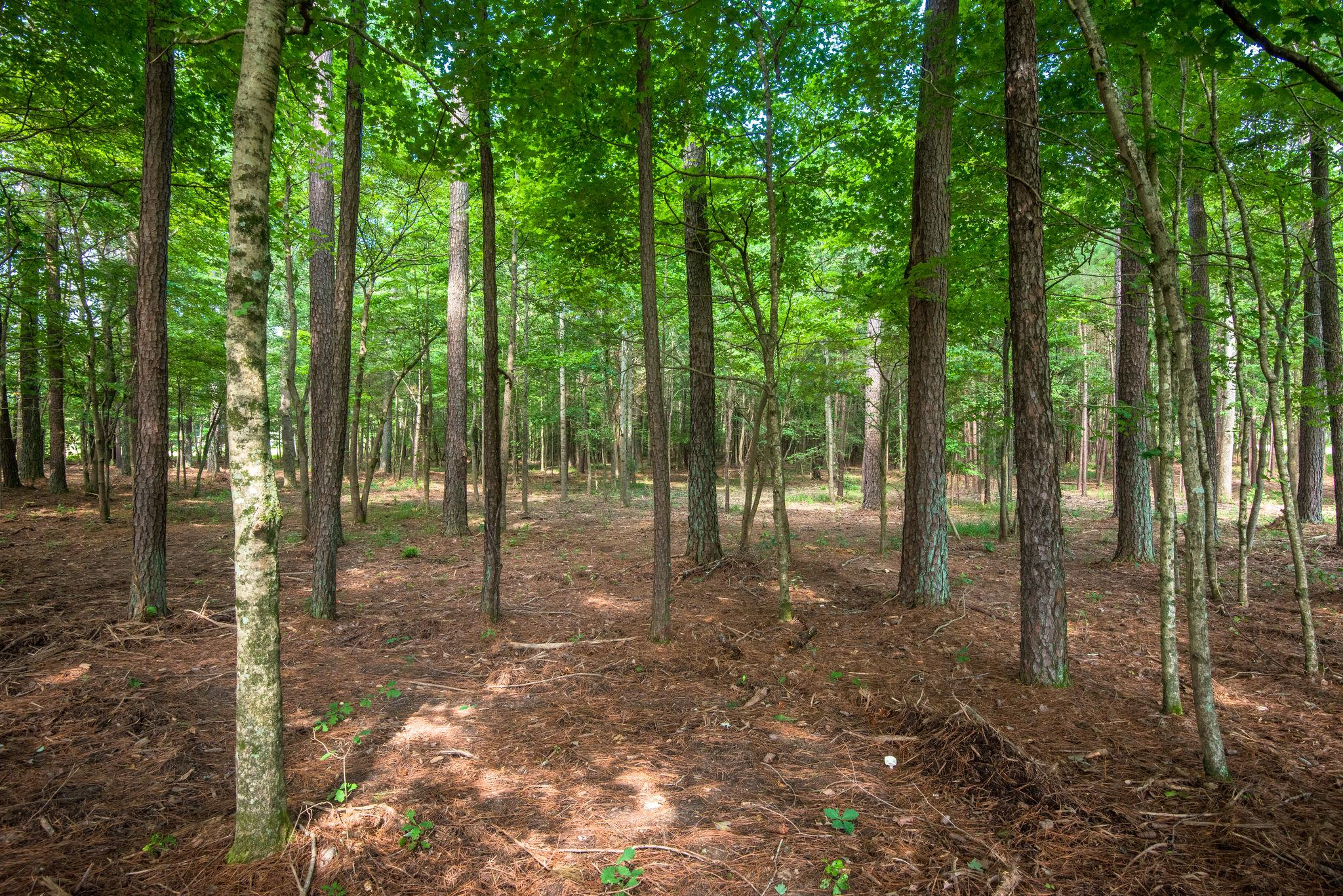 7211 Bahne Rd, Fairview in Williamson County County, TN 37062 Home for Sale