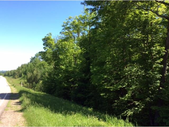 Sugar Lake Trail - photo 5