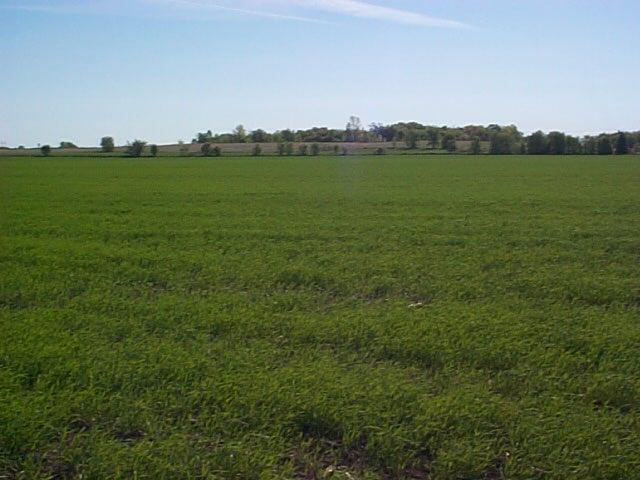 Real Estate for Sale, ListingId: 30733304, Buffalo,MN55313