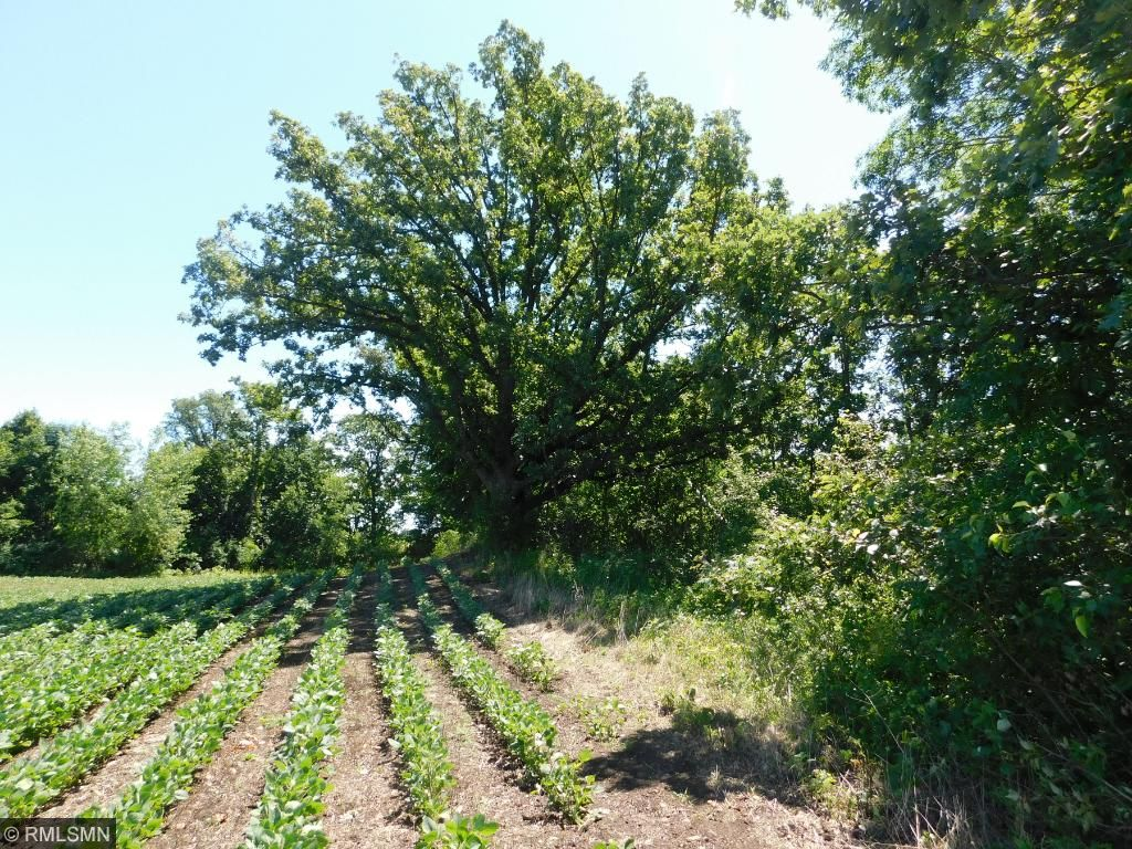 Image of  for Sale near Cold Spring, Minnesota, in Stearns County: 38.7 acres