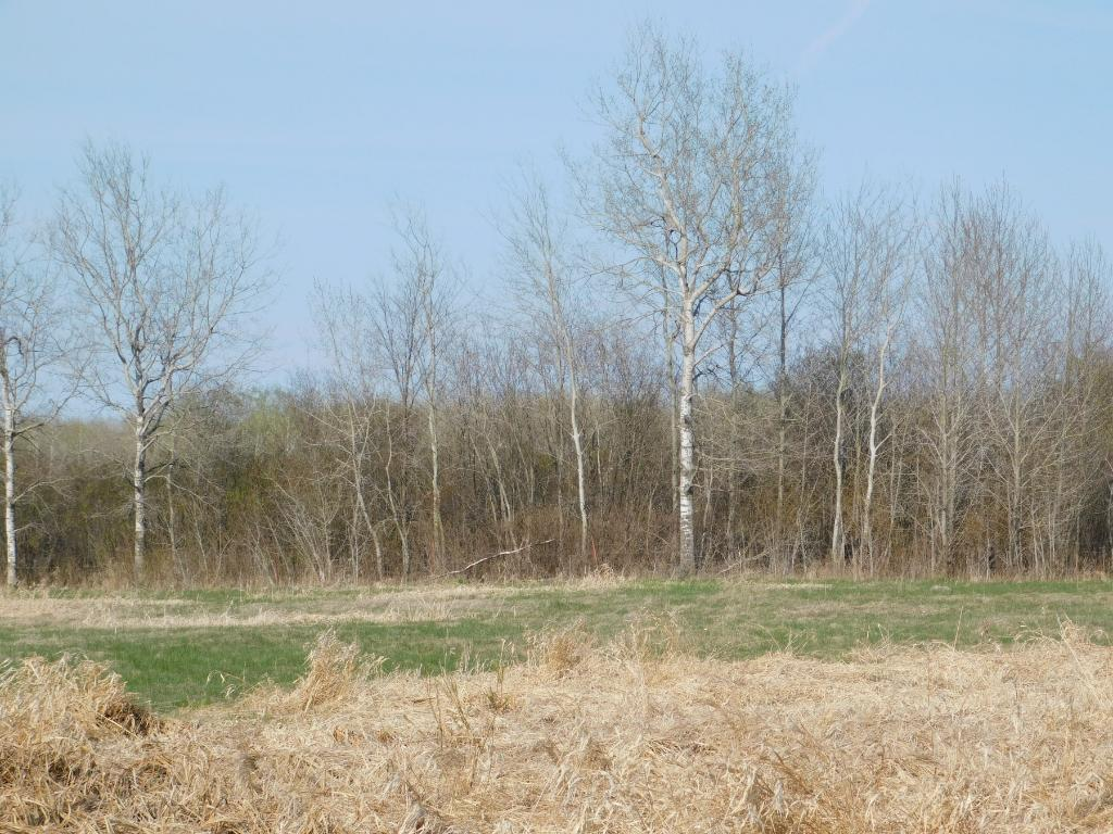 Image of  for Sale near Kettle River, Minnesota, in Carlton County: 80 acres