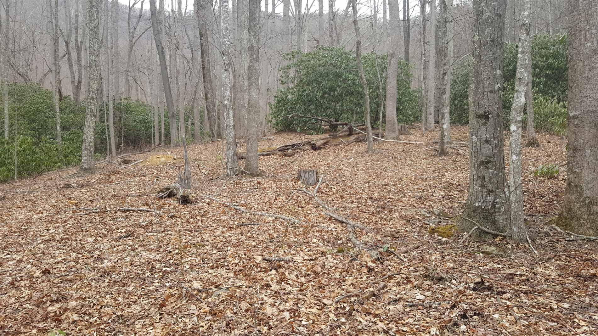 Photo of Lot 28 Buckeye Branch Drive  Clyde  NC