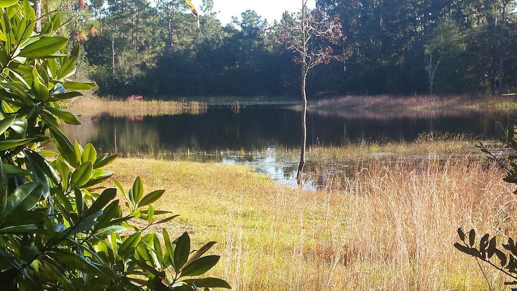 Lot 52 # BERRYHILL ROAD, Boiling Spring Lakes, NC 28461