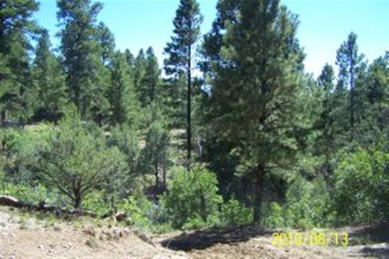 35 acres in Tierra Amarilla, New Mexico