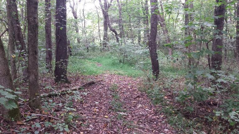 1.21 acres Science Hill, KY