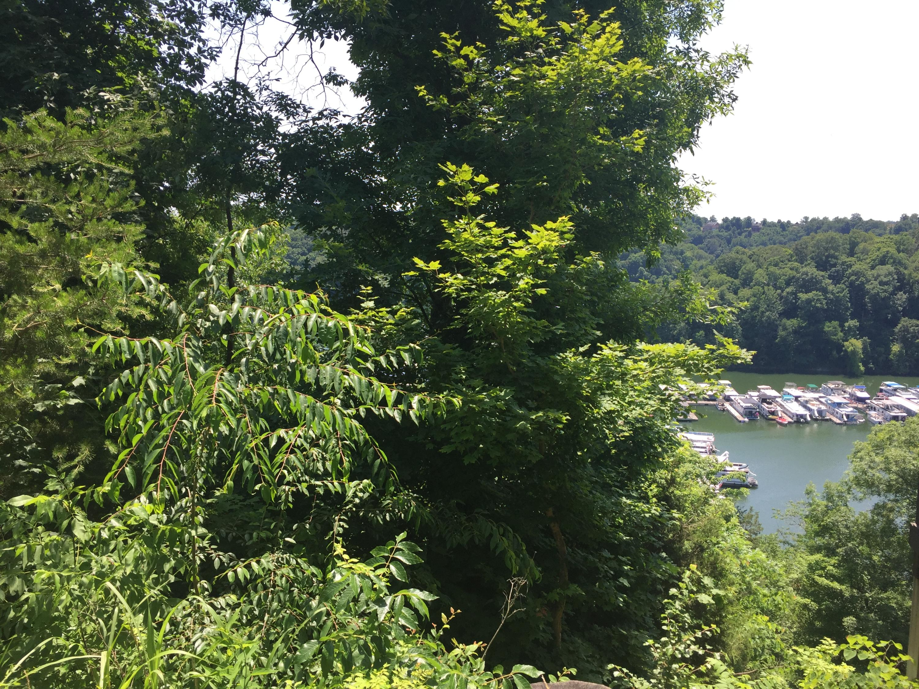 Property in Lake Cumberland, Jamestown, Somerset, Monticello, Dale