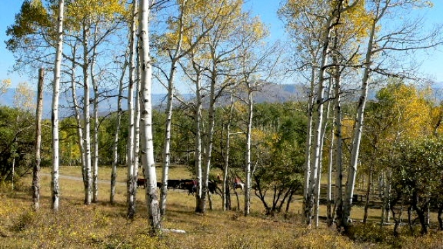 87.8 acres in Ridgway, Colorado