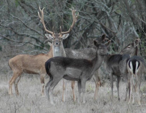 195.7 acres Kingsville, TX