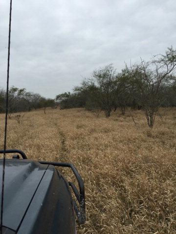 118.86 acres Kingsville, TX