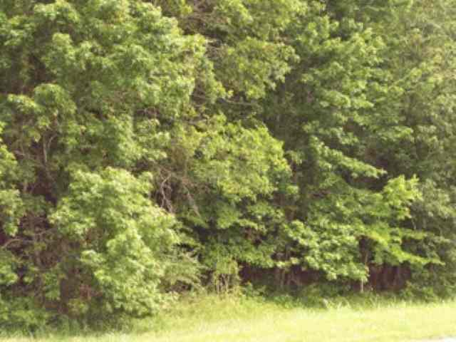 Image of Acreage w/House for Sale near Paris, Tennessee, in Henry county: 26.00 acres